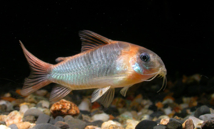 Cichlids Cichlid Fish And Fish On Pinterest